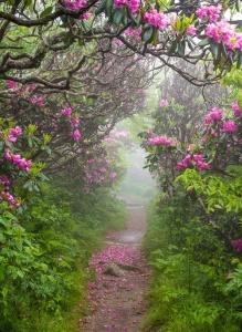 Spring-Craggy-Garden-North-Carolina-photo-via-kris